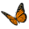 butterfly_monarch